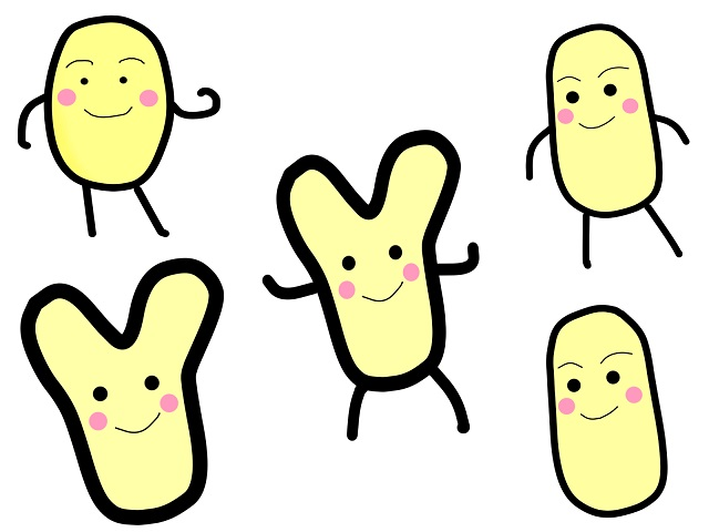 乳酸菌とビフィズス菌の違いは何ですか?