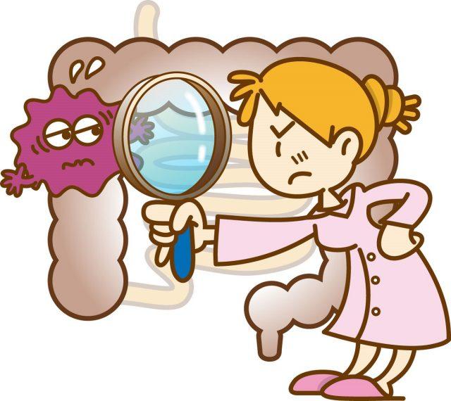 乳酸菌と免疫力